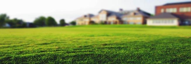 Best Lawn Types